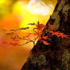 秋の幻想Ⅱ