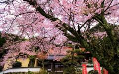山寺の春Ⅱ