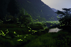 ホタルの流れる谷