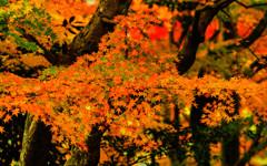 錦秋の候Ⅱ
