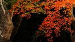 秋を飾るⅡ
