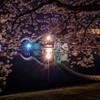 夜桜の錦帯橋