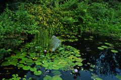 ninjinの松江百景 英国庭園1