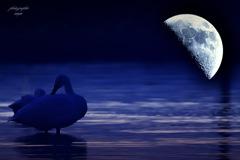 ninjinの松江百景 Moon & Swan 2