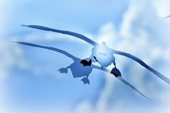 ninjinの松江百景 白鳥「蒼の世界」6