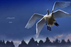 ninjinの松江百景 白鳥のいる風景29