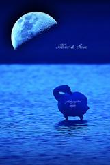 ninjinの松江百景 Moon & Swan 3