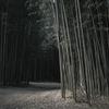 Tre rừng
