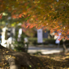晩秋の優しい光 - 2