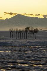 朝焼けの稲架木