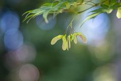 新緑の風に揺れ