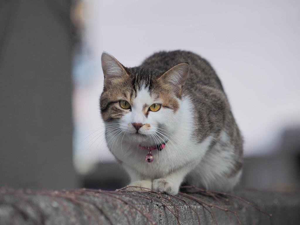 可愛い猫さん、こちらを凝視