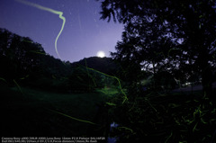 Moonlight fever☆