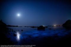 Noctiluca of moonlight☆