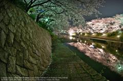Fallen cherry blossoms☆