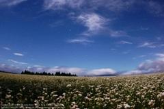 Buckwheat field of moonlight☆