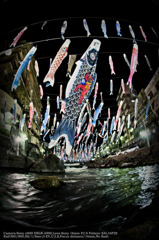 Koinobori at night☆