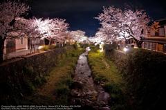 YOZAKURA in Ichinosaka river☆