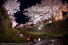 Cherry blossoms in Ichinosaka river☆