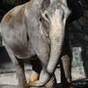 象の花子さん