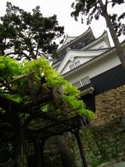 岡崎城 with藤棚