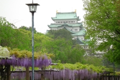 名古屋城 with藤棚