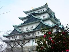 名古屋城 withサザンカ