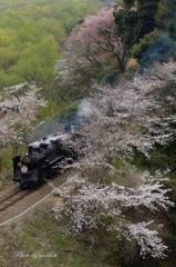 桜を追い越して