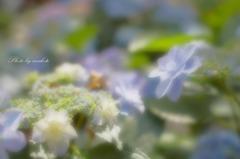 優しく咲いて