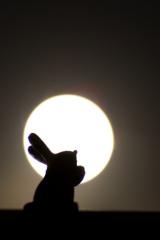 月に願いを