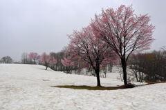 山の里に春が来た