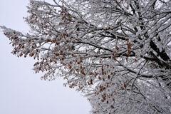 枯葉に雪の華