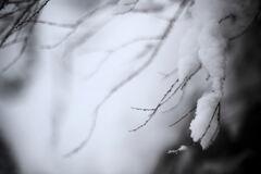 儚い雪の情景