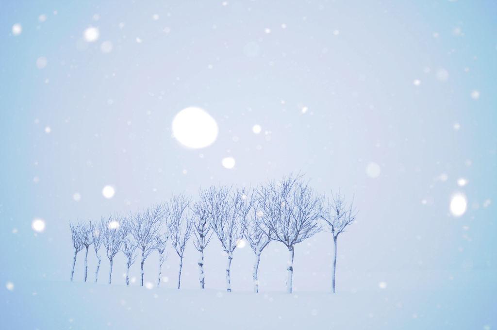 雪の妖精に願いを