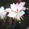 路傍に咲く P1150761