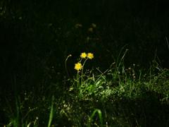 光の道 P1180957zz