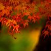 紅に燃ゆる _IGP9365zz