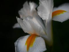 今朝の庭花 P1180936zz