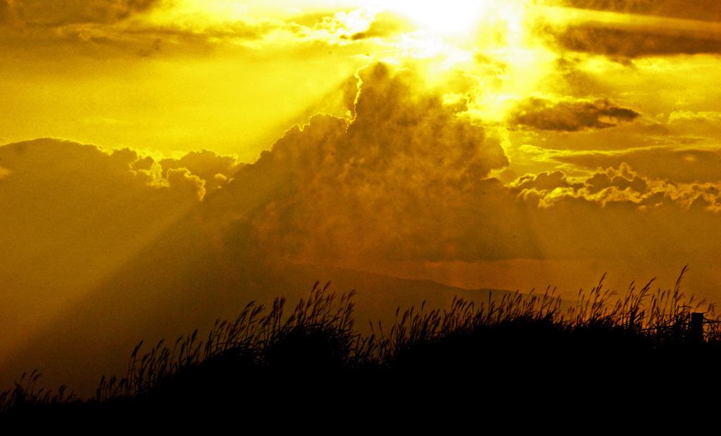 薄の原に陽が落ちる IMGP8482zz