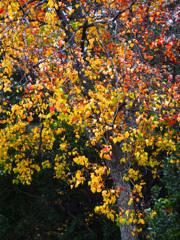 ご近所で見た何気ない秋模様 P1160479zz