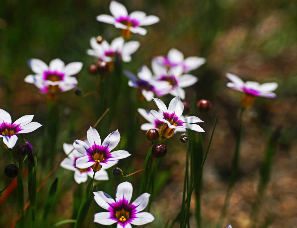 野に咲く花も美しい P1220061zz