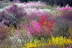 色とりどりの春風景 IMGP1588zz