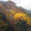 紅葉 上高地付近