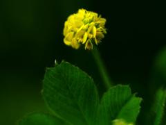 野で見た凄く小さな花 P1220628z