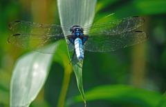 硝子の翅 P1370180zz