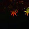 秋に輝く _IMG0038zz