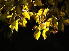 紅葉 木漏れ日 P1160899zz
