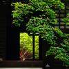 青モミジの寺 P1180571zz