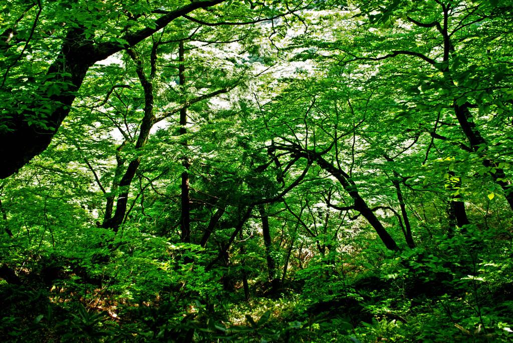 森の力 IMGP4382zz