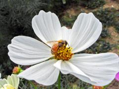 真白き花 KIF_5961zz